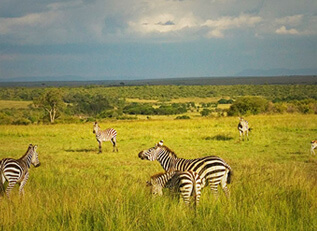 africa cruises - crystal cruises